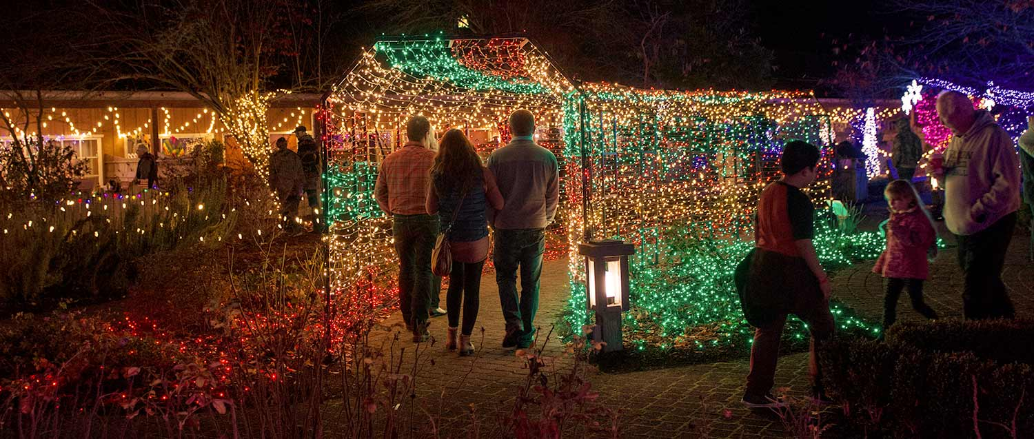 christmas time light show in the garden